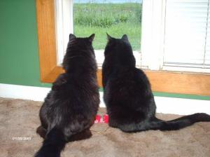 Bird watching buddies