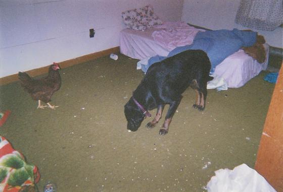 room 008